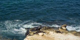 Mar Lion Rock Imagem de Stock Royalty Free