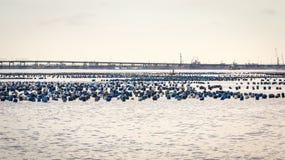 Mar litoral da carreira da pesca Imagem de Stock