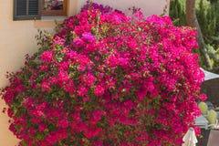 Mar mediterráneo de la flor en una pared de la casa imágenes de archivo libres de regalías