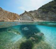 Mar Mediterrâneo subaquático dos peixes do litoral da Espanha imagem de stock