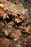 Mar Mediterraneo subacqueo Immagini Stock Libere da Diritti