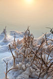 Mar muerto - Bush marchitado en el amanecer Foto de archivo libre de regalías