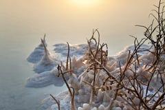 Mar muerto - Bush marchitado en el amanecer Fotografía de archivo libre de regalías