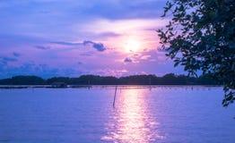 Mar na floresta dos manguezais, nivelando a luz no por do sol fotografia de stock