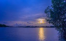 Mar na floresta dos manguezais, nivelando a luz no por do sol imagens de stock royalty free