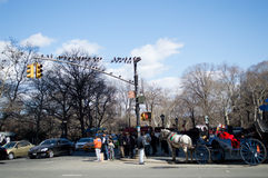 Mar 15, 2014, NYC: Pigeons on a light pole Royalty Free Stock Photo