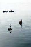 Mar, pássaros, barcos Imagens de Stock