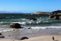 Mar, playa de la arena y pingüino Fotos de archivo libres de regalías