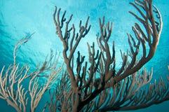 Mar rachado Ros do Pore Foto de Stock