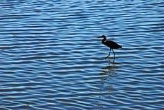 Mar raso com um egret Imagens de Stock Royalty Free