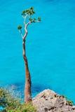 Mar, rocha e uma planta solitário Imagens de Stock Royalty Free