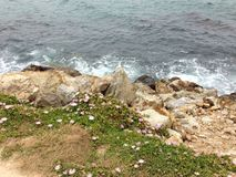 Mar-rocha-plantas que vivem junto fotografia de stock