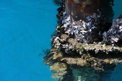 Mar Rojo Fotos de archivo