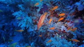 Mar Rojo de Egipto poco Brother imagen de archivo libre de regalías