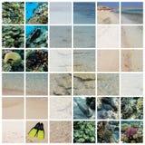 Mar Rojo, Egipto Fotografía de archivo libre de regalías