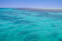 Mar Rojo, fondo, agua azul limpia, arrecife de coral imágenes de archivo libres de regalías