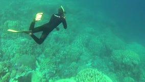 Mar Rojo que bucea Egipto almacen de video