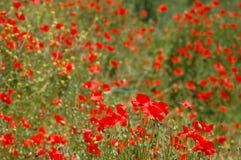 Mar Rosso fotografia stock libera da diritti
