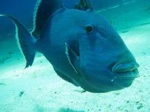 Mar Rosso residente Immagine Stock