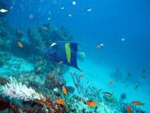 Mar Rosso residente Immagini Stock Libere da Diritti