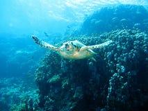 Mar Rosso residente Fotografie Stock