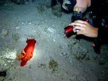 Mar Rosso spagnolo dell'operatore subacqueo e del danzatore fotografia stock