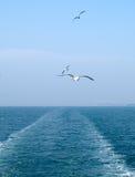 Mar severo Imagem de Stock