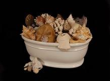 Mar Shell Collection Fotos de Stock Royalty Free