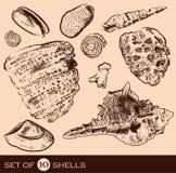 Mar Shell Collection Mano original drenada Foto de archivo libre de regalías