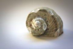 Mar Shell Still Life con el foco selectivo suave Foto de archivo