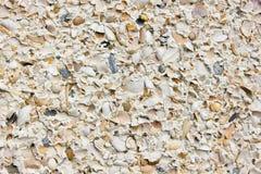 Mar Shell Wall Fotos de archivo libres de regalías