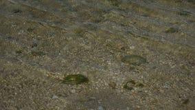 Mar subacuático del paisaje en Java del oeste Indonesia Foto de archivo libre de regalías