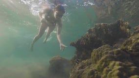 Mar subacuático que se zambulle de la mujer turística y mirada de pescados tropicales cerca del arrecife de coral Mujer joven que almacen de video