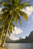 Mar sul do moorea das árvores de coco Fotografia de Stock Royalty Free