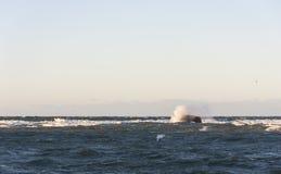 Mar tempestuoso Fotos de archivo libres de regalías
