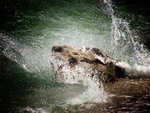 Mar tormentoso e rocha em Ika, Croácia Foto de Stock Royalty Free