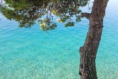 Mar tranquilo y pino Imagenes de archivo