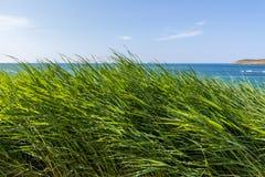 Mar a través de la hierba Fotografía de archivo