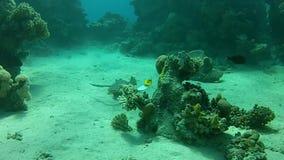 Mar tropical del mundo subacuático snorkeling almacen de video