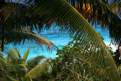 Mar tropical, palmeras, costa. Imágenes de archivo libres de regalías