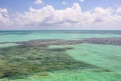Mar tropical seco de Tortugas fotografia de stock royalty free