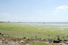 Mar verde Fotografia de Stock Royalty Free