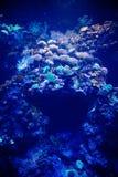 Mar World-flysea02 foto de stock