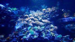 Mar World-flysea05 imagens de stock