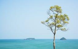 Mar y árbol Imagen de archivo libre de regalías