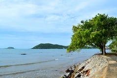 Mar y árbol Fotos de archivo libres de regalías
