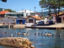 Mar y casas de Florianopolis Imágenes de archivo libres de regalías