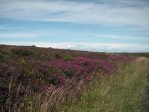 Mar y cielo de Exmoor Reino Unido Fotografía de archivo libre de regalías