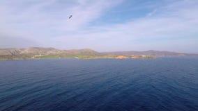 Mar y gaviota almacen de metraje de vídeo