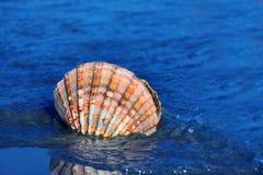 Mar y playa arenosa con el shell fotos de archivo libres de regalías